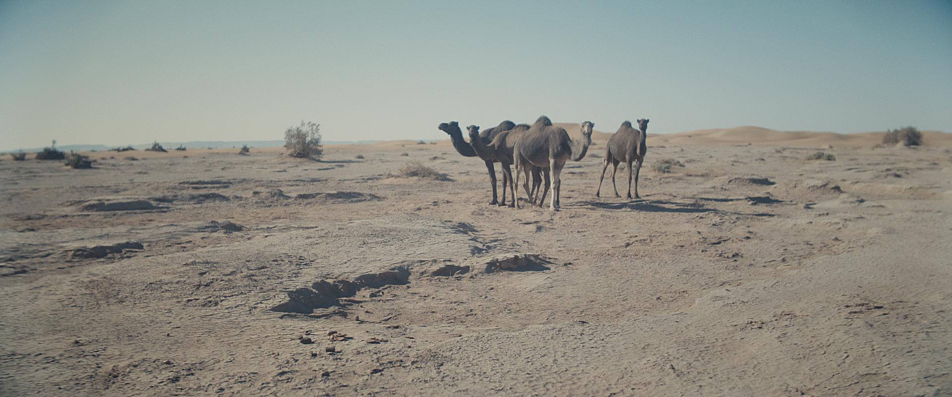 Morocco_Stills3_2.17.1.jpg