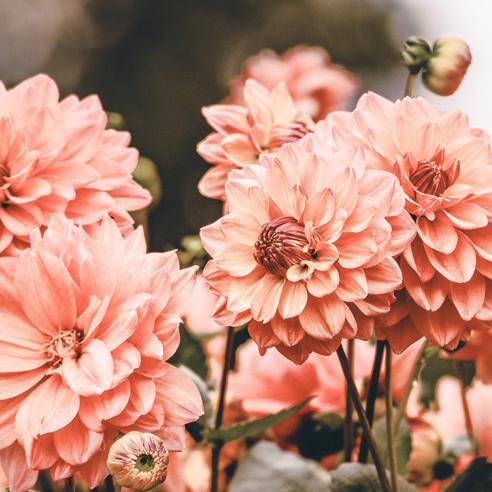 No sidebar flowers.jpg