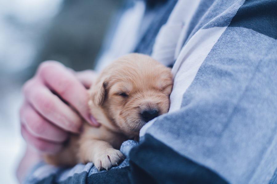 Inför besöket - För att vi ska kunna ge dig och ditt husdjur bästa möjliga service när du besöker oss behöver du boka en tid innan du kommer. Det är också bra om du förberett dig hemma inför besöket. Vi har sammanställt några saker som är bra att tänka på.