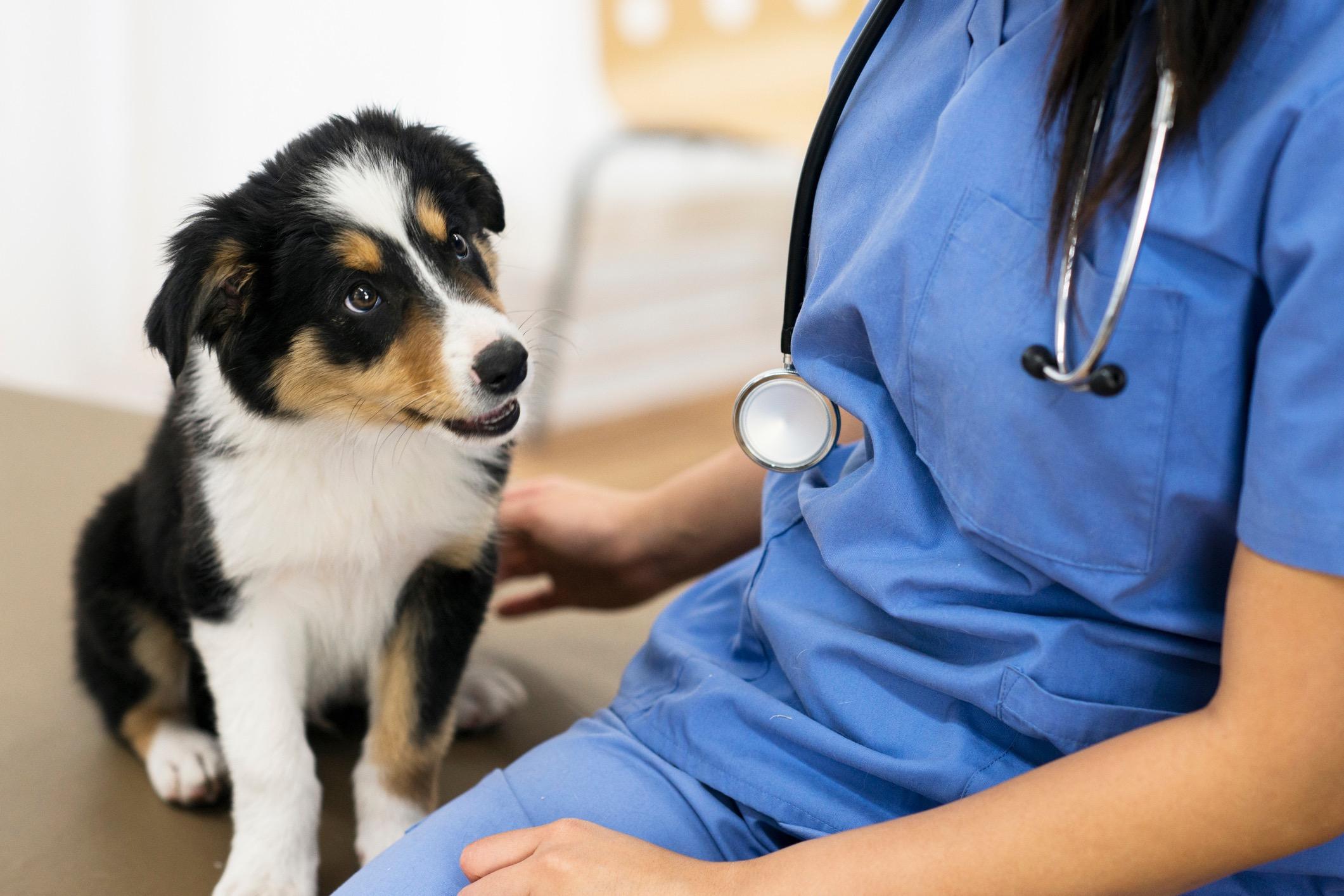 hund_veterinar_forebyggande_vard_halsingesmadjursklinik
