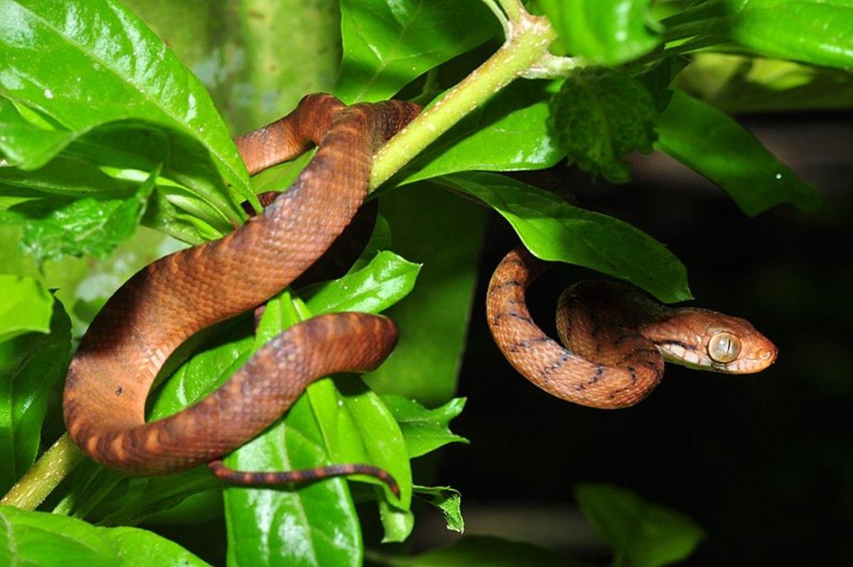 snakey-snake.jpg