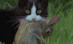 cats_pic_002+missy.jpg