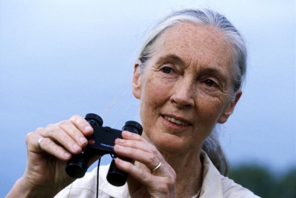 Review:  Jane Goodall on Parrots and Parrot Confidential
