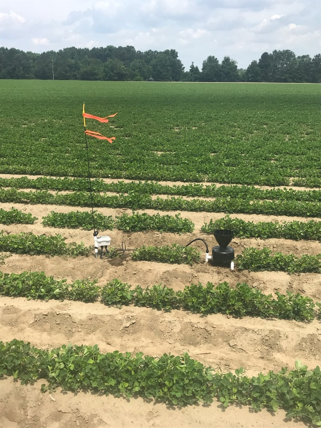 Trellis soil moisture sensor system and rain gauge in peanuts.