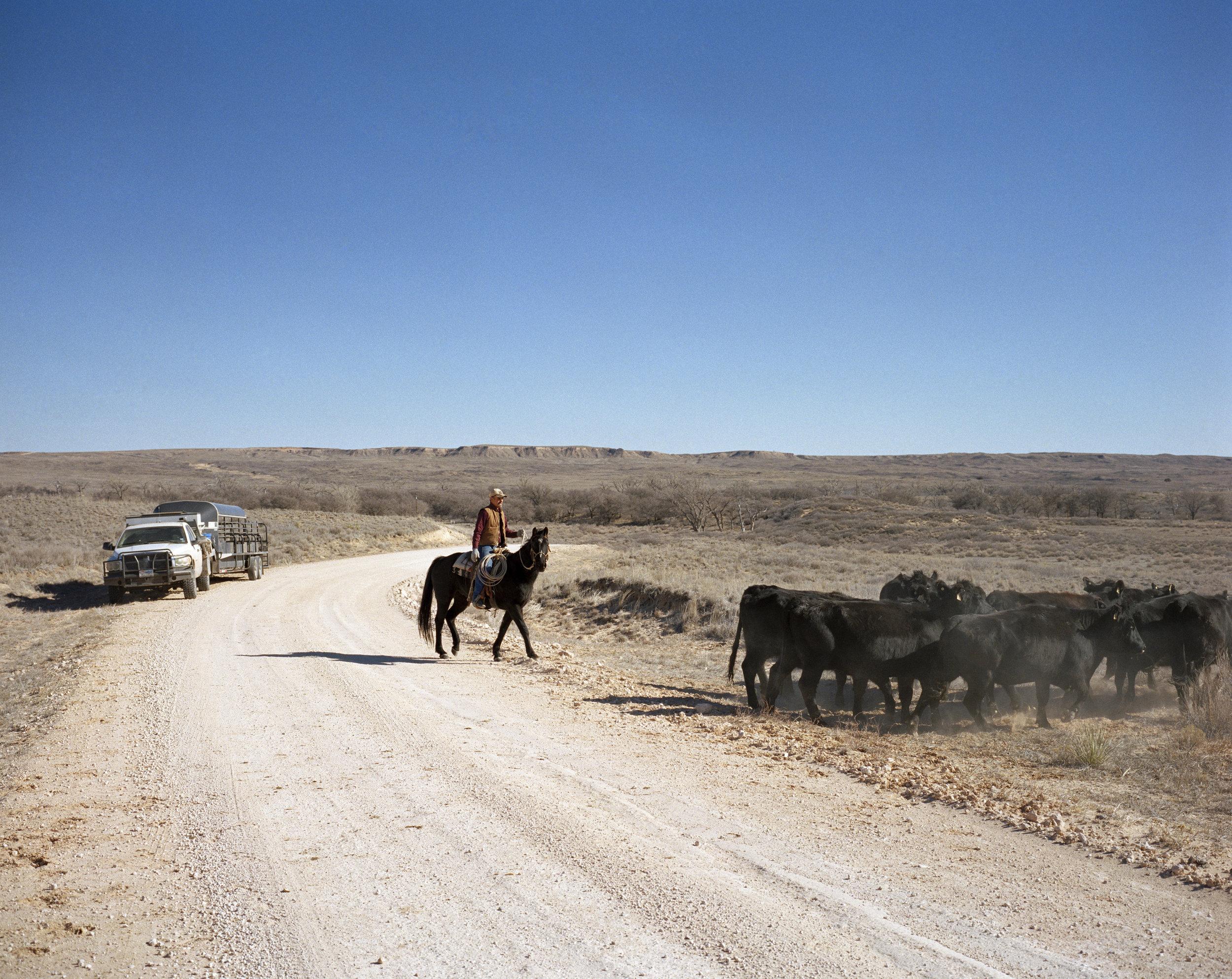 Jon_Ervin_Cattle Drive.jpg