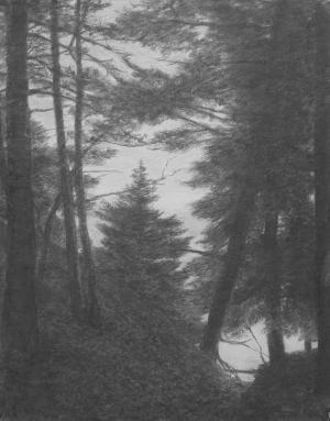 Katherine Meyer Trees Above the Water.jpg