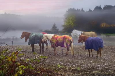 Jon Exley-morning mudders.jpg