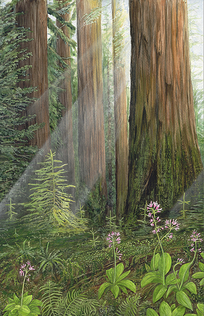 Kim Reid-New-Sequoia-Clintonia-Blooms-Large-View.jpg