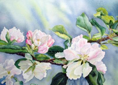Pat Cahill-apple blossoms.jpg