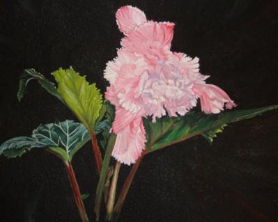 Pat Durbin-ruffled pink begonia.jpg