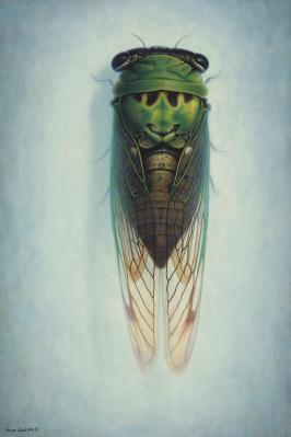 Shawn Gould-cicada.jpg