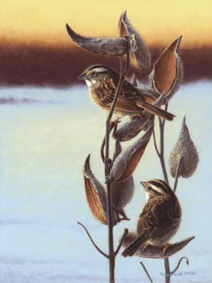 Shawn Gould-milkweed and sparrows.jpg