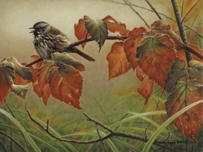 Shawn Gould-sparrow song.jpg