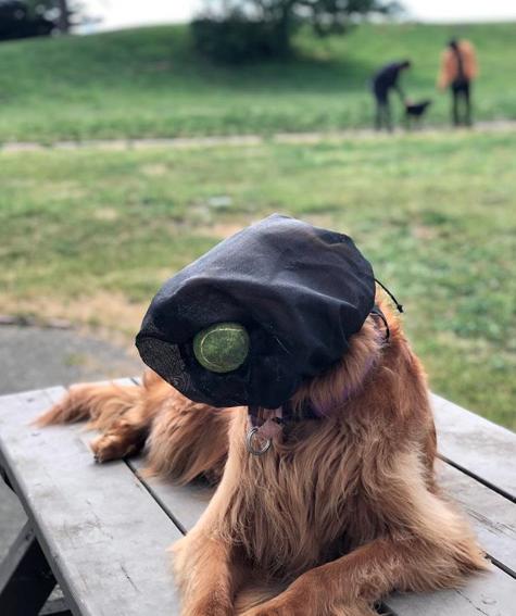 Metro Dog Foxtail Hood