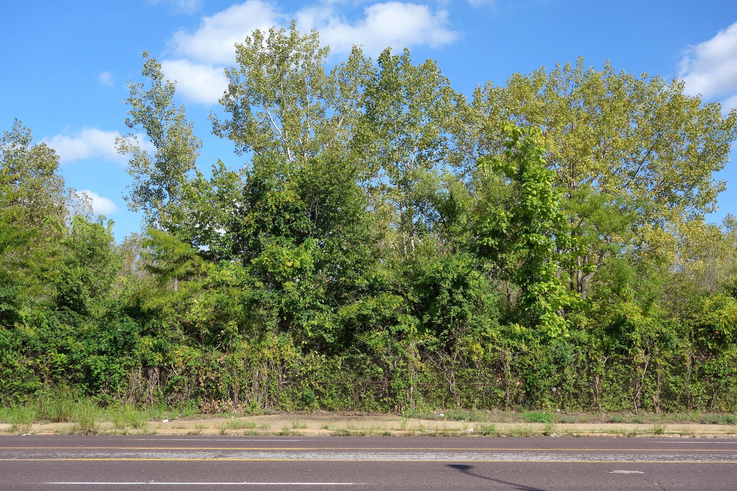 Figure 9. Looking east across Jefferson Avenue to the former Pruitt-Igoe site, St. Louis, 2016. Photograph by Joseph Heathcott.
