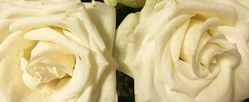 small-2-roses-.jpg