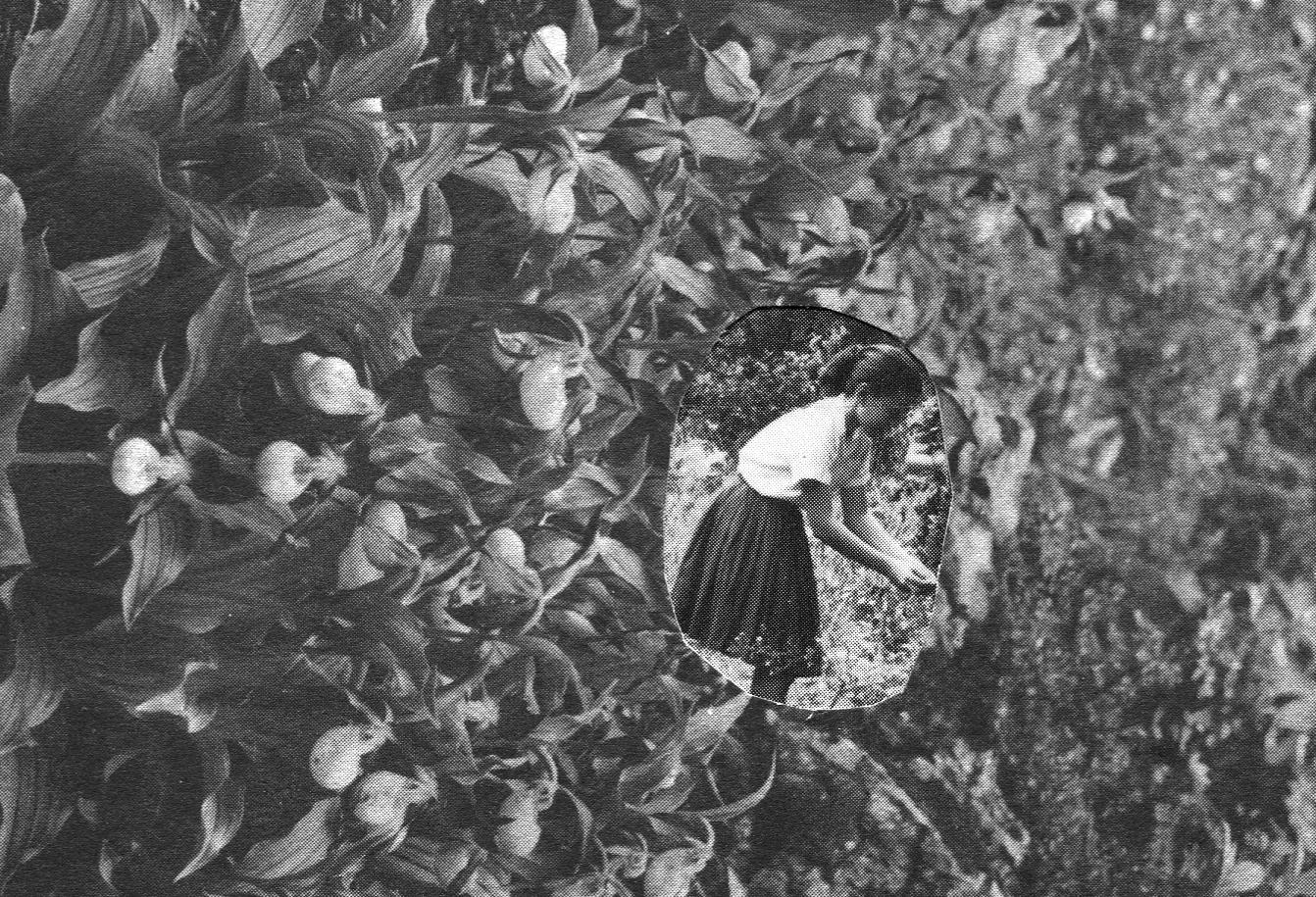 Garden, 2016