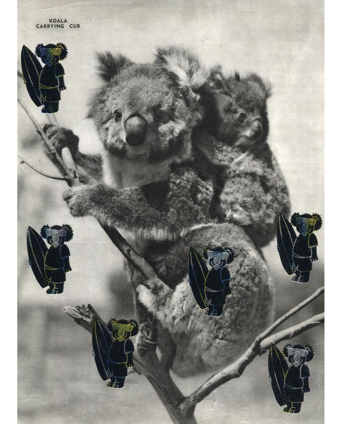 koala-surf-small.jpg
