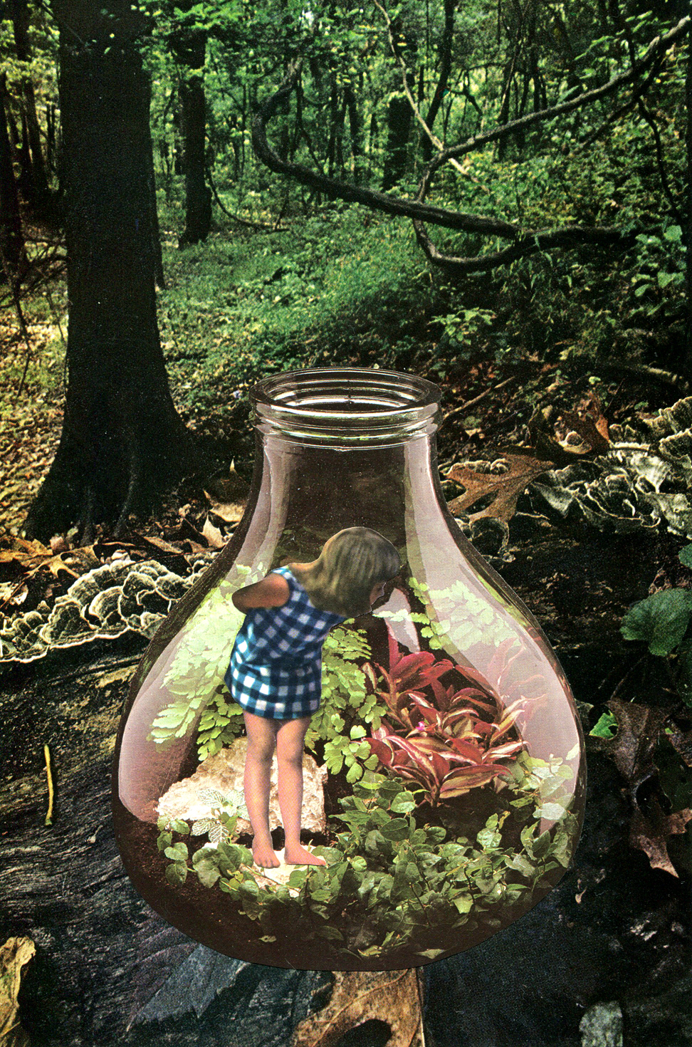 Terrarium, 2019, collage, found paper