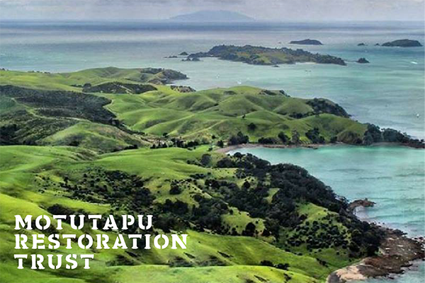 Every entry equals 4 new trees on Motutapu. -