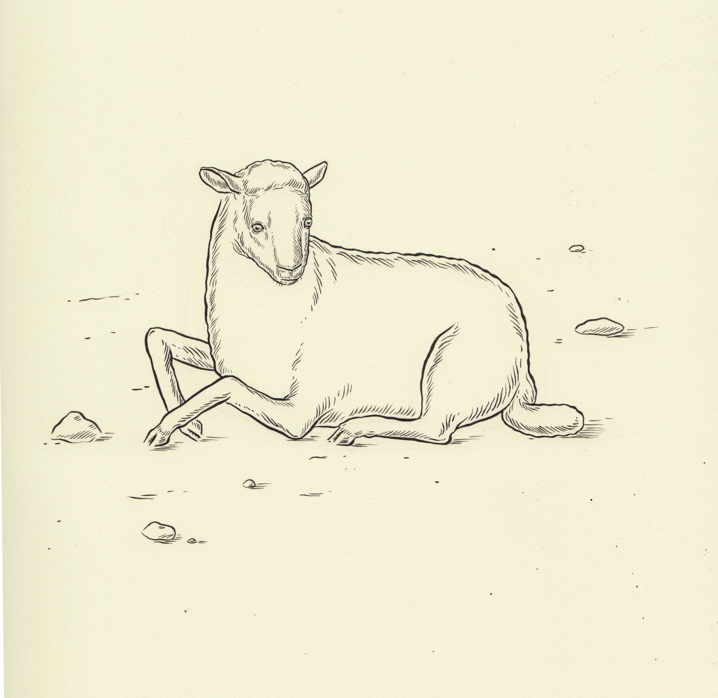 Nina Torr Quiet Lamb, 2017  Ink on Fabriano  340mm x 325mm  R4500 (framed only)