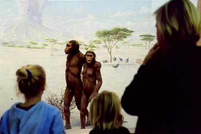 "Evolution II  C-print, 20"" x 30"", 2004"