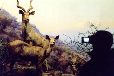 "Natural History III  C-print, 20"" x 30"", 2004"