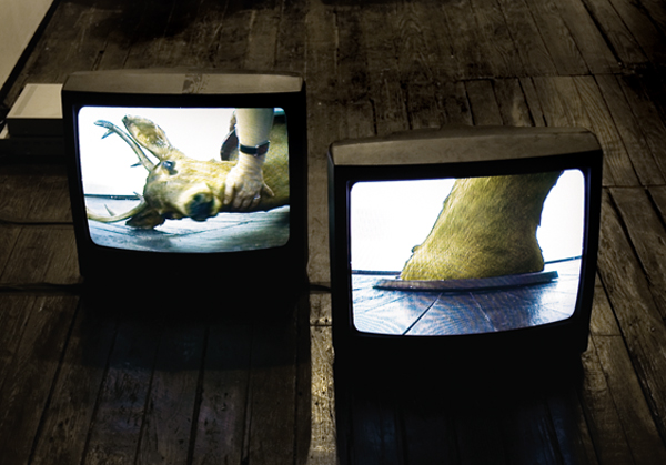 Liselot van der Heijden, Dissonance, Installation View, 2008, courtesy LMAKprojects