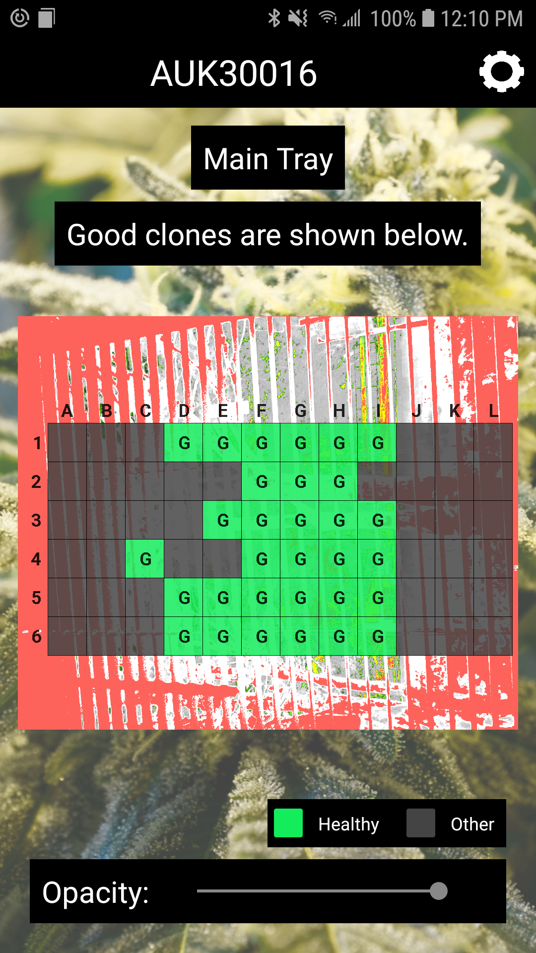Clone Analysis - One touch and we tell you which clones are healthy
