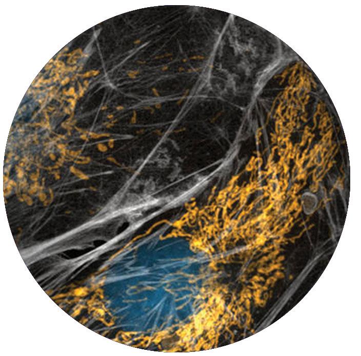 Bioenergetics: A Common Initiating Mechanism - Fei Yin Ph.D.
