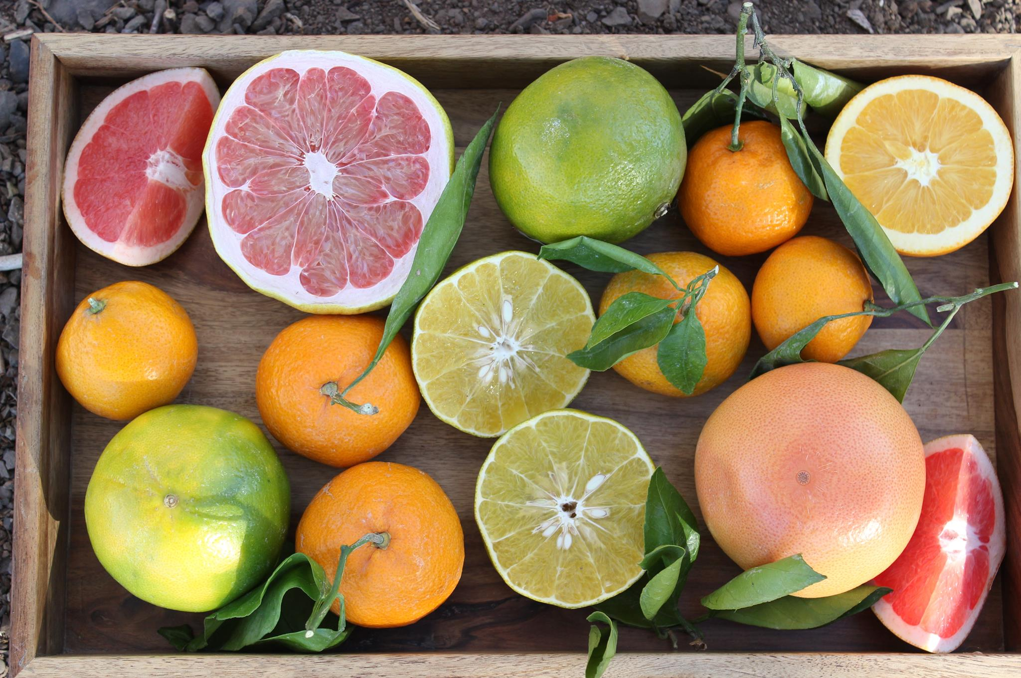 A picture of our fresh, organic Citrus Fruit display.jpg