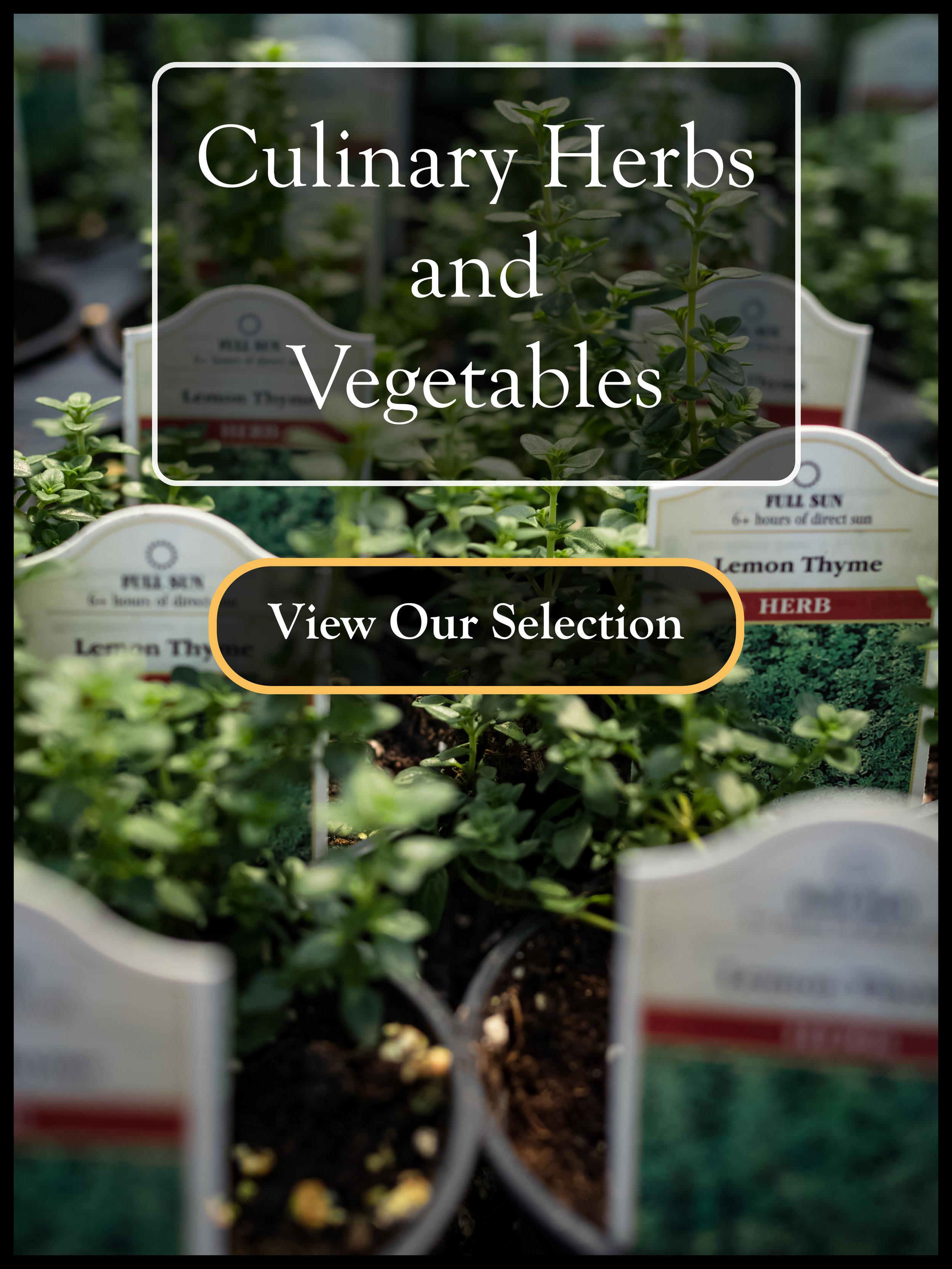 Culinary Plants and Veggies.jpg