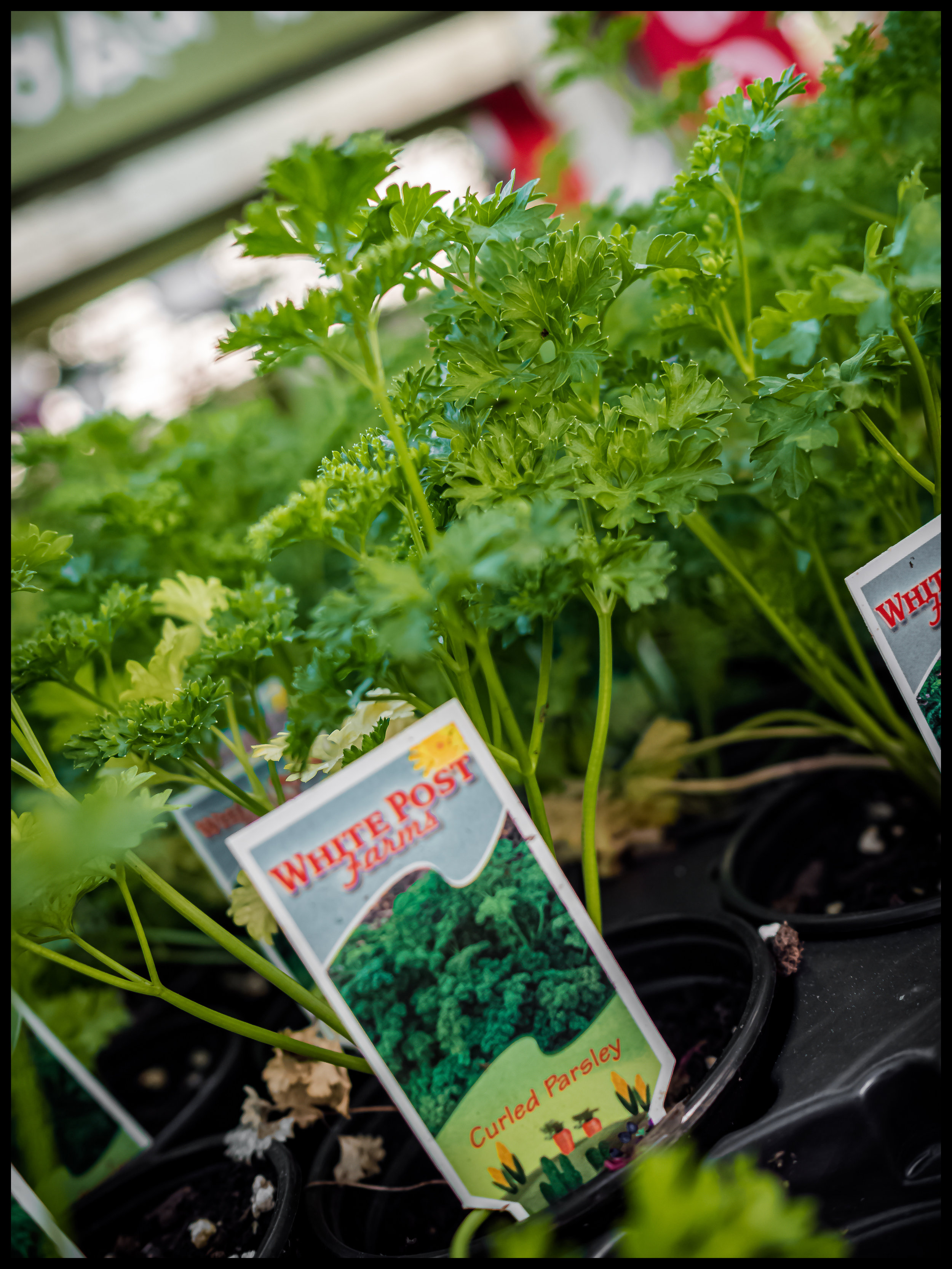 Parsley is great with any Italian dish, especially some Chicken Parmesan