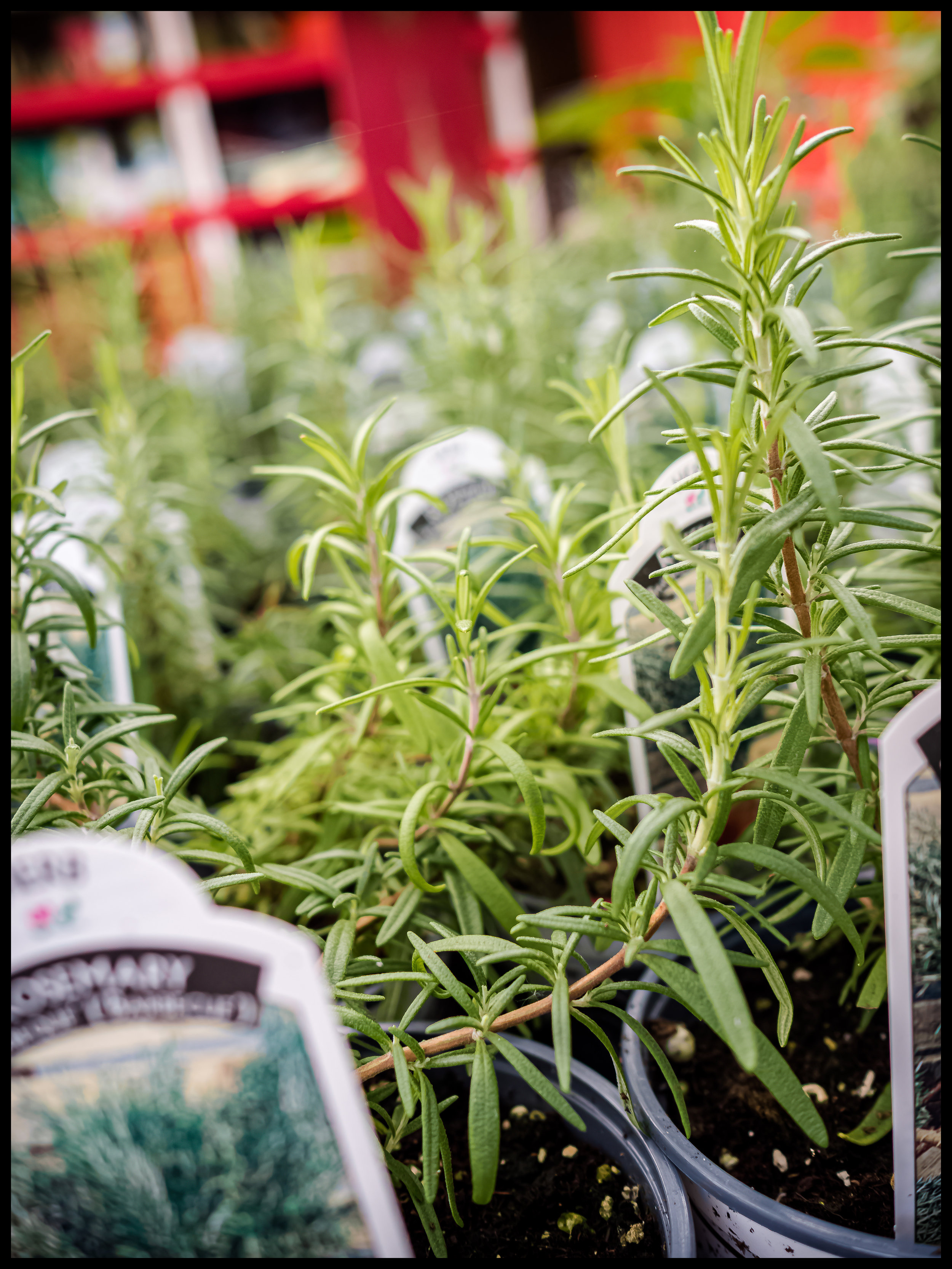 Rosemary is a very versatile herb that goes very well with Vegetables, especially potatoes