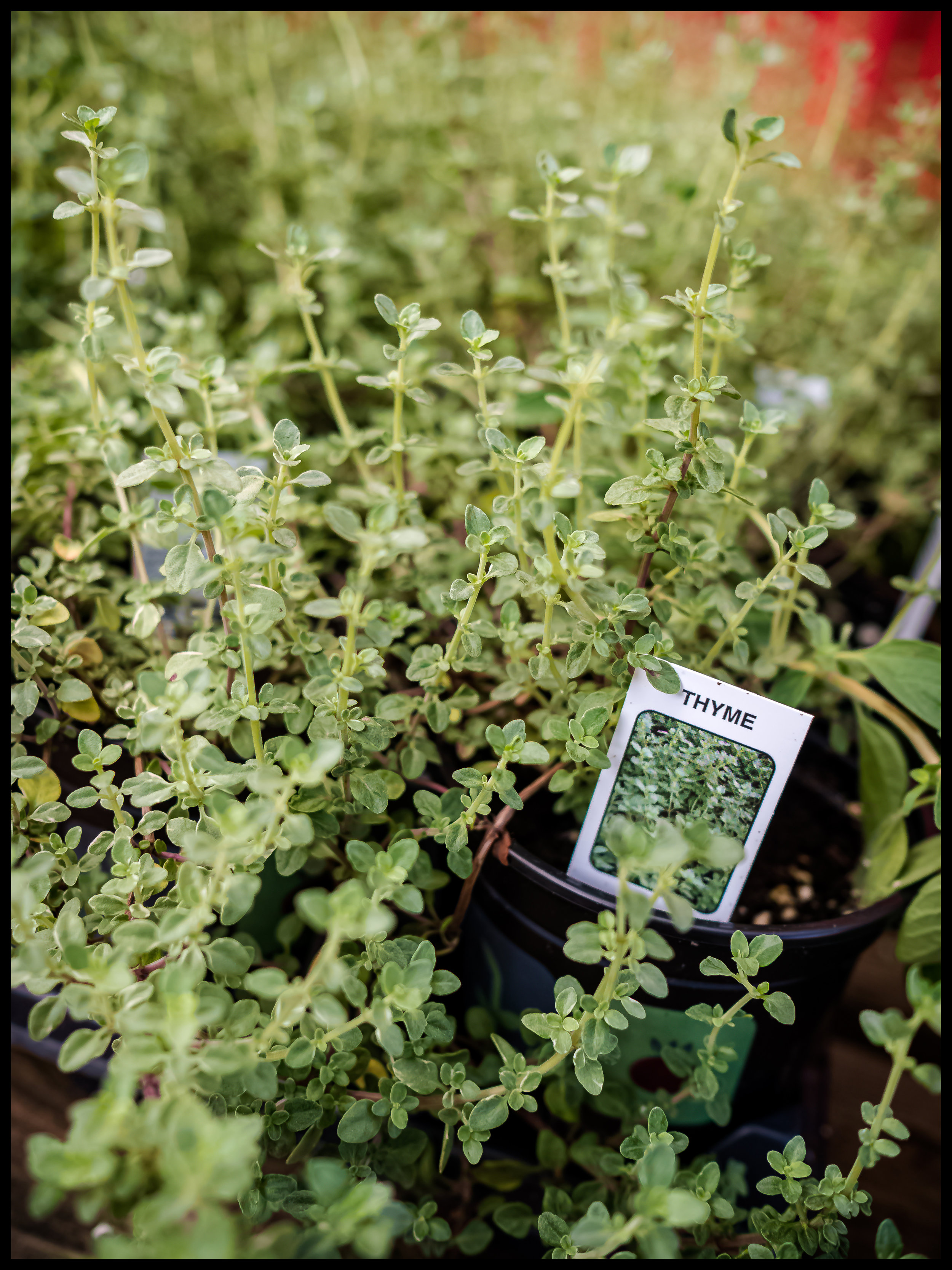 Every dish gets better with time and many are improved with Thyme
