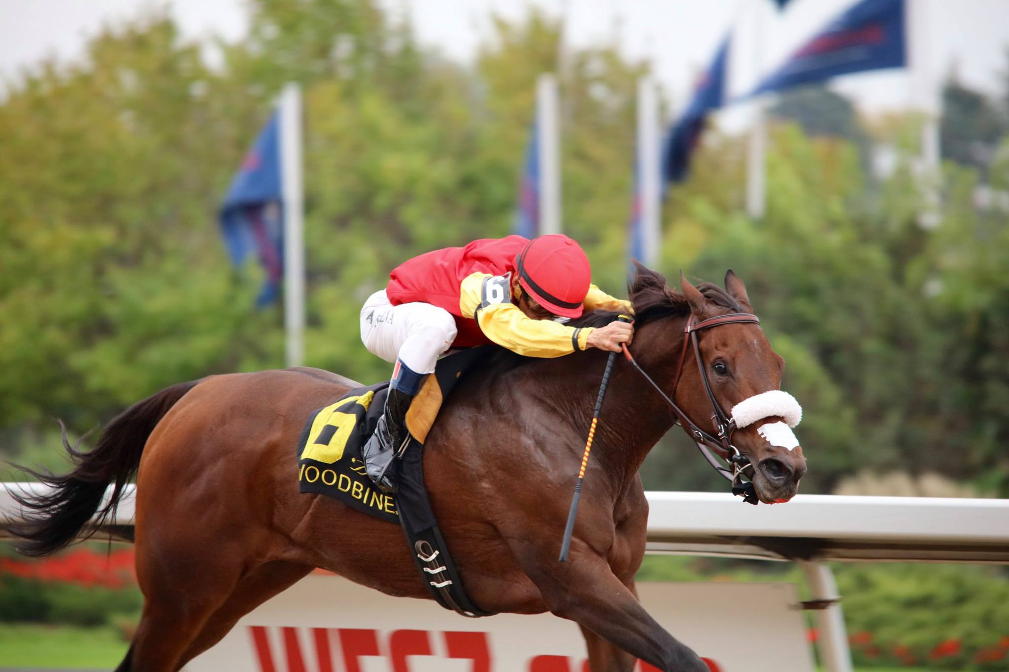 sOUTHERN rING - Speightstown / Seeking the Ring2019: B.F. x Uncle Mo