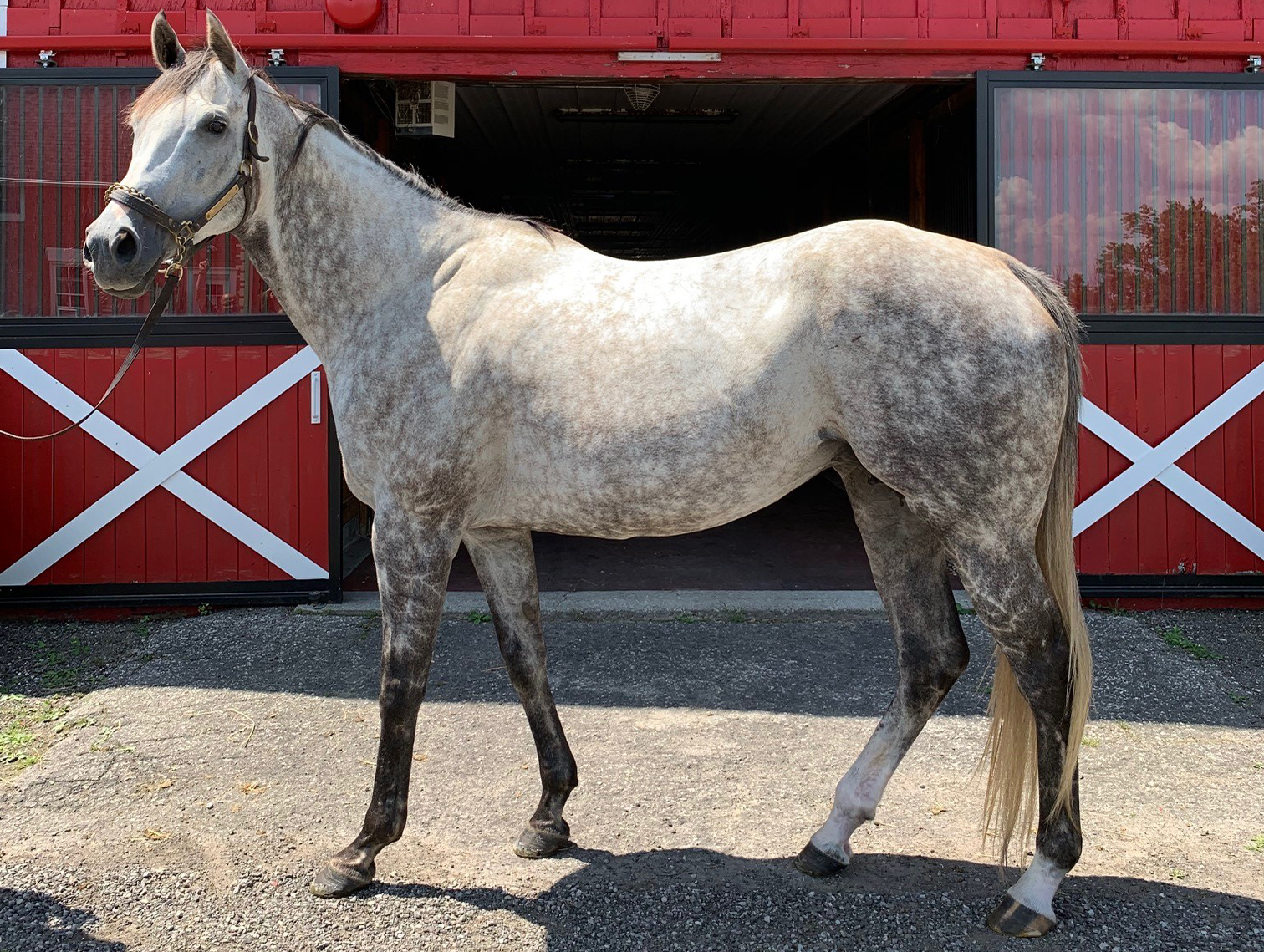 sIREN'S sONG - Unbridled's Song / Misty Mission2019: B.F. x More Than Ready