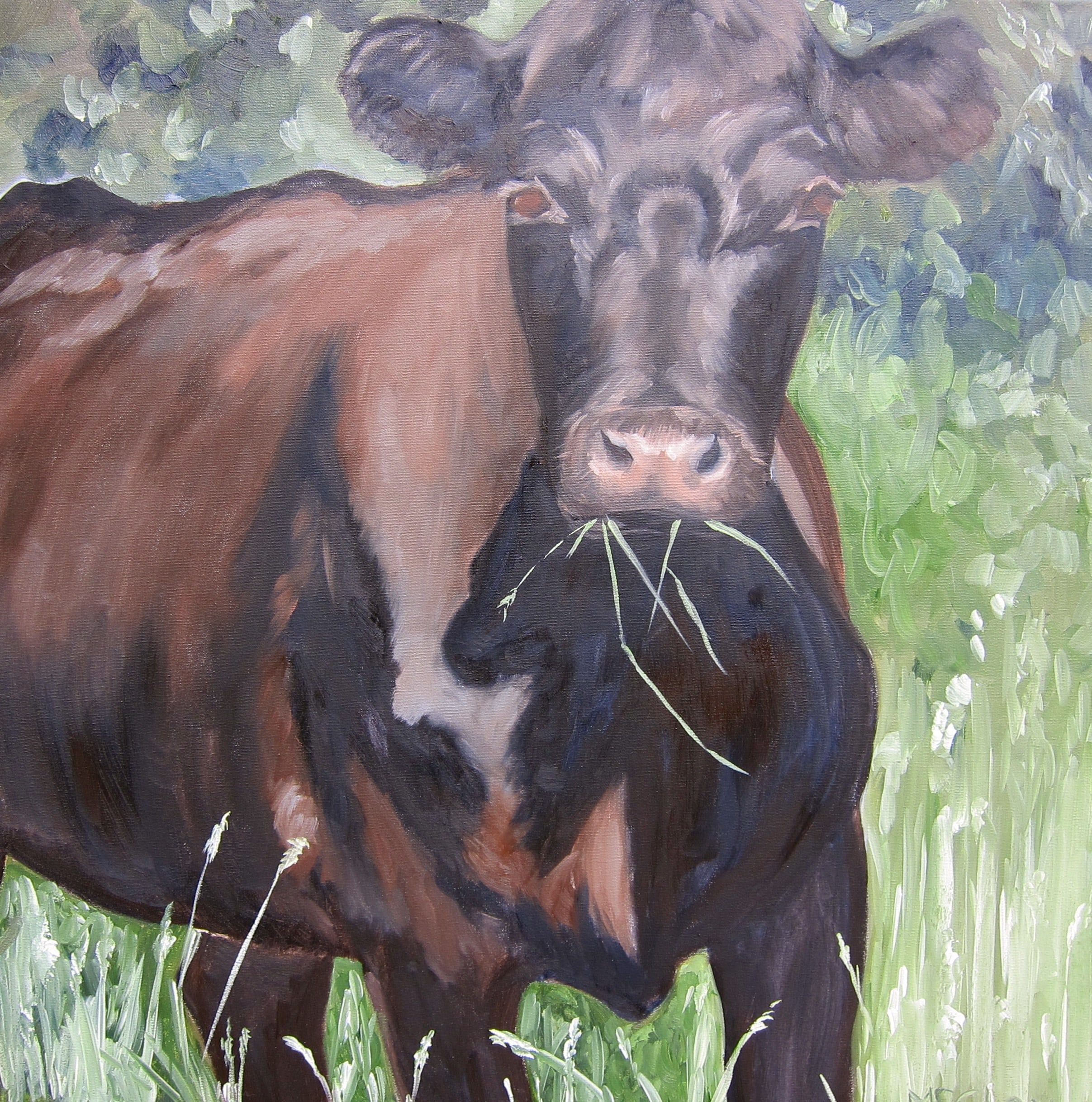 "BLACK COW 30"" x 30"" - SOLD"