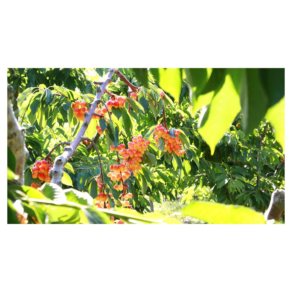 Skylar_Rae-Web-Brand_Assets-Photo-Orchard.png