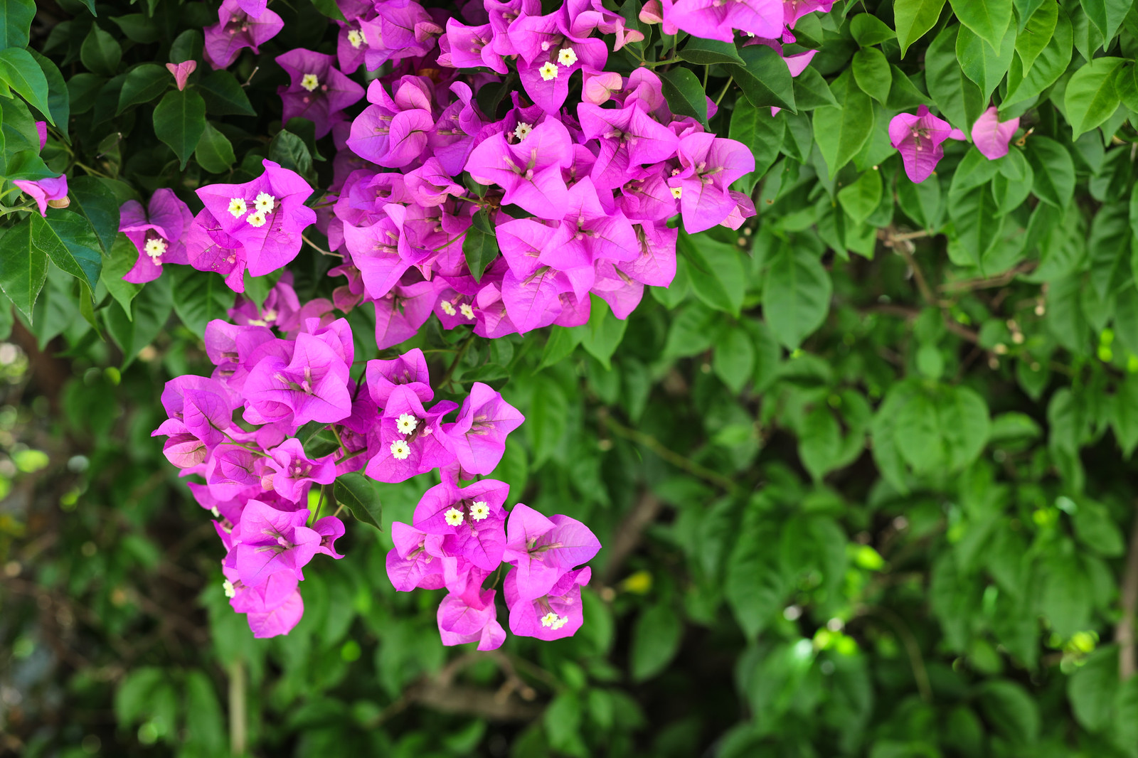 Exterior 725 University Blu Skye Media-8678-X3.jpg