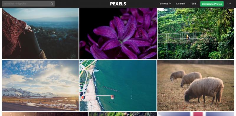 Pexels.png