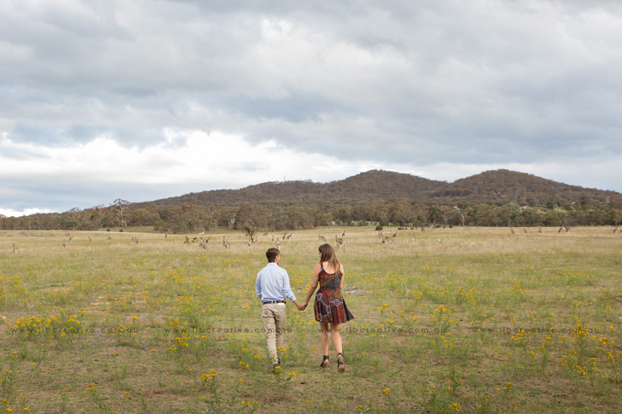 lib-creative-walk-field-kangaroos.jpg