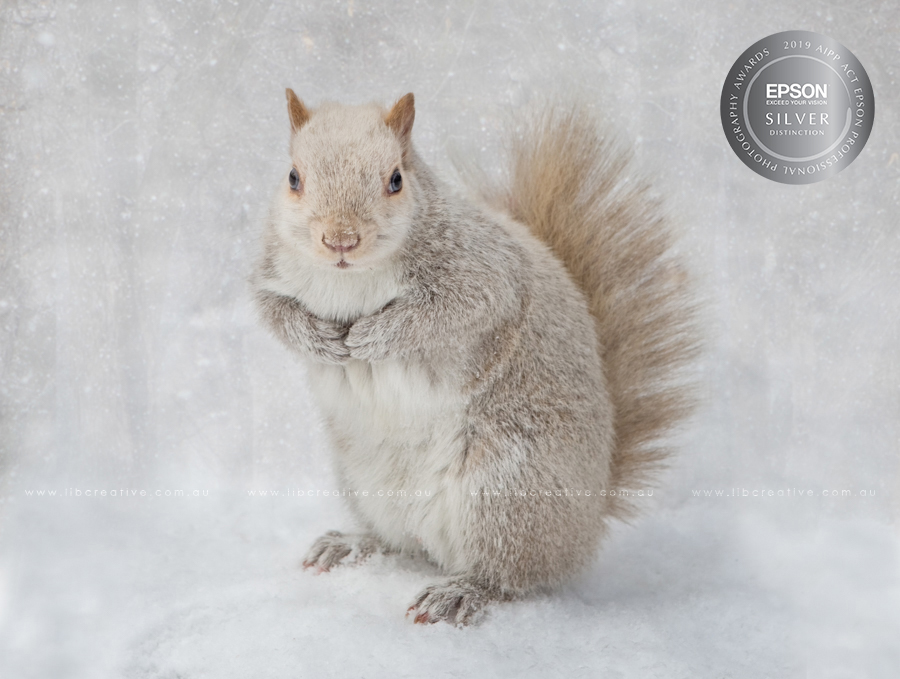 white-squirrel-silver-distinction.jpg