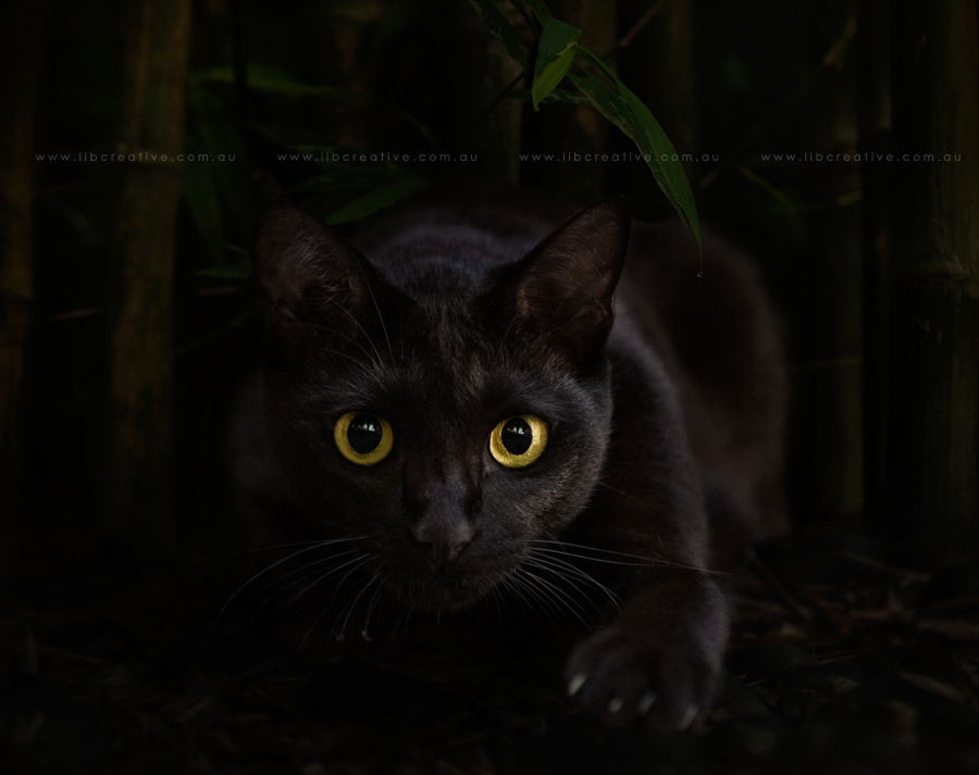 lucky-black-cat.jpg