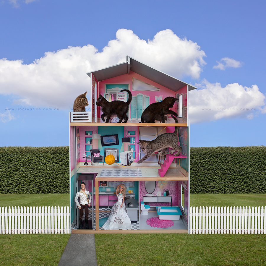 kittenhouse.jpg