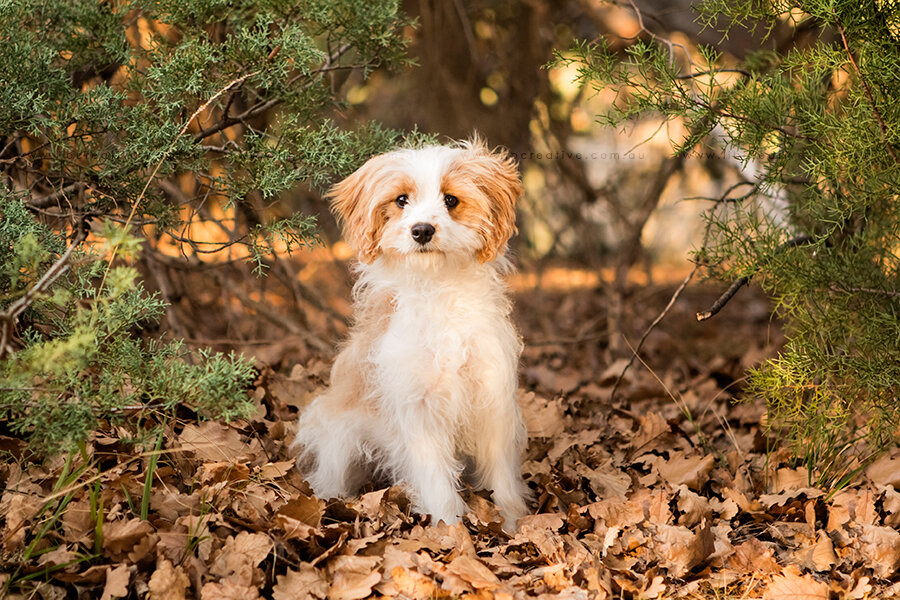 puppy-pet-photography-libcreative.jpg