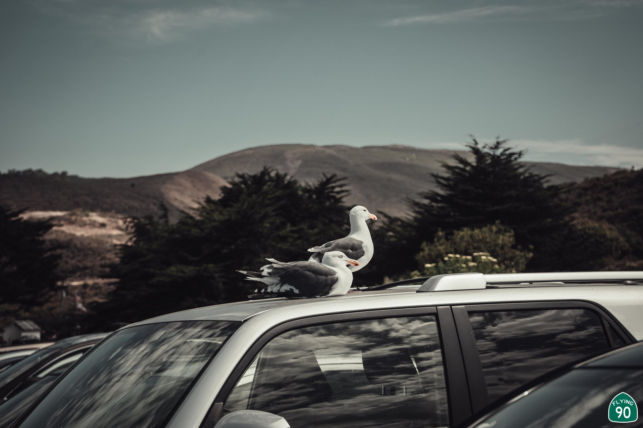 There was so many people, the Seagulls had to find a new place to sit..