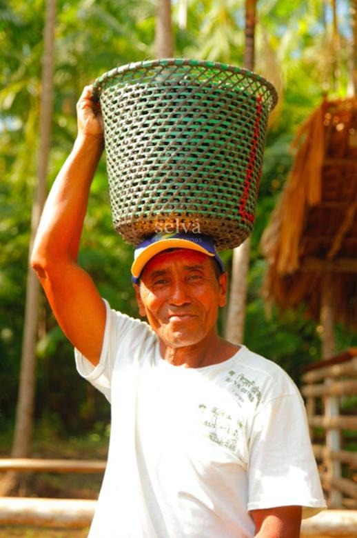 Mr José carrying a basket of açaí in this backyard