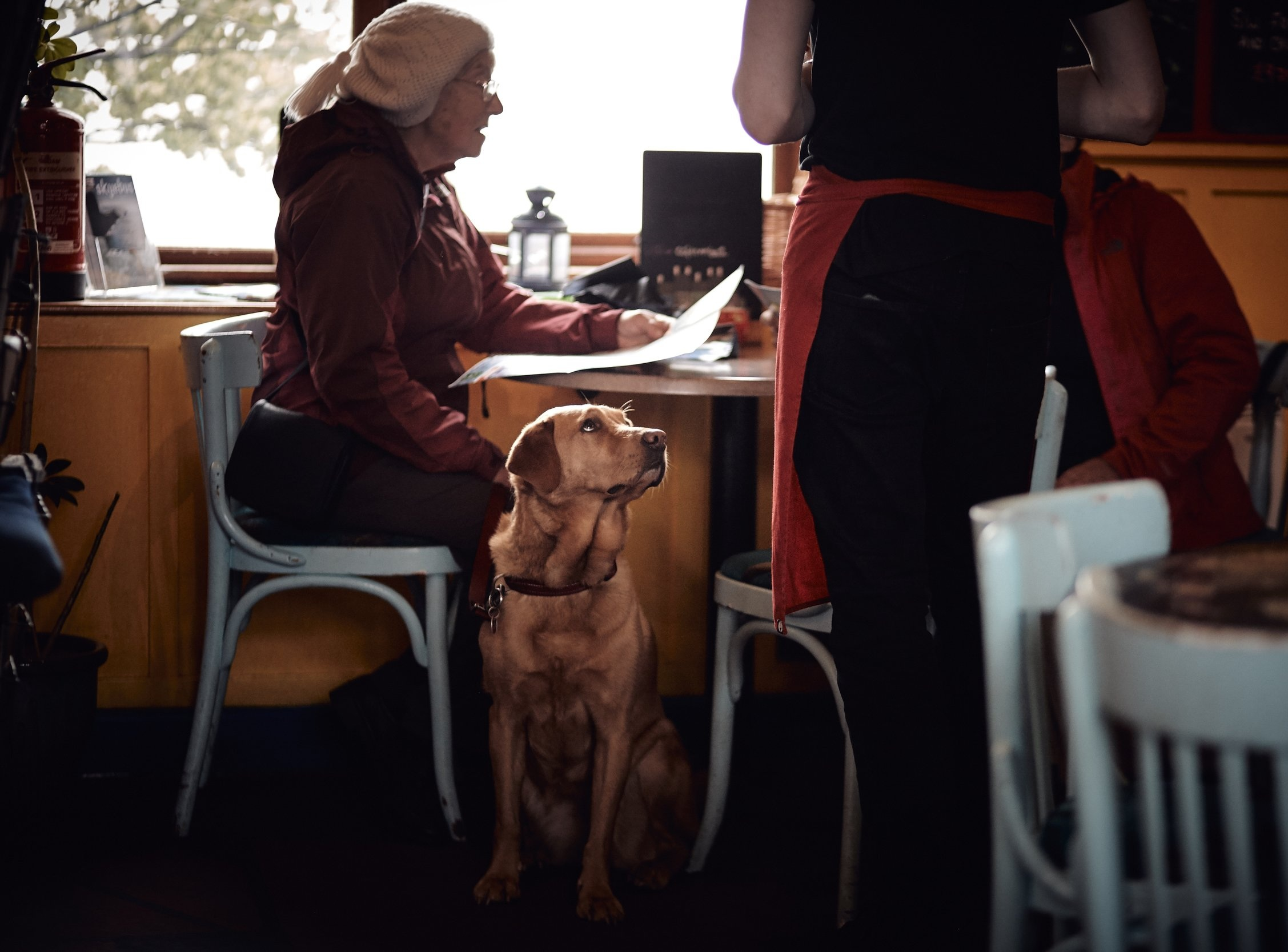 Dogs - As a family business we know how dogs are an additional member which is why we allow dogs in all of our stores; they can enjoy the Filmore experience too.