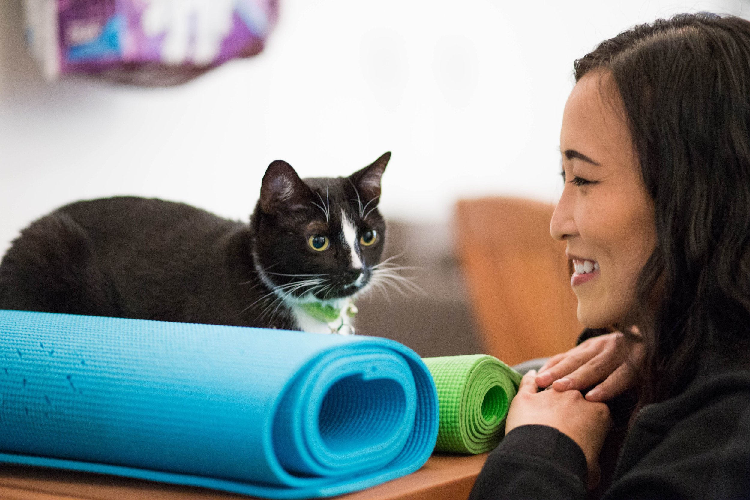 Yoga + Cats - Yoga + Cats  is a super fun yoga class where you can move through an all-levels vinyasa flow while sharing space with our café cats! Will you be the lucky person who gets stuck in downward dog while a kitty lays on your mat?For class availability and sign up, click here.